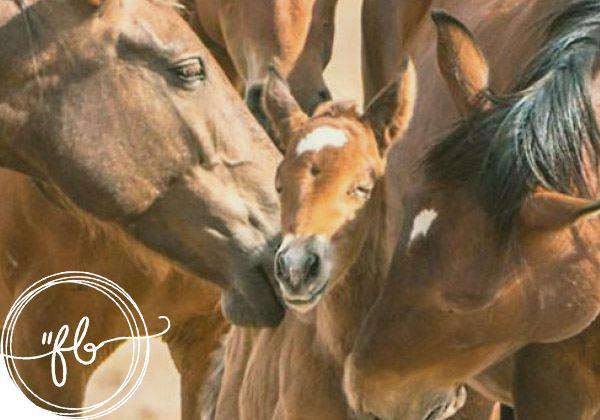 Citazioni e frasi belle sui cavalli: la raccolta delle dediche più belle 1