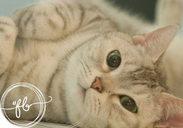 Frasi belle sui gatti: aforismi e citazioni sul tuo piccolo felino domestico 1