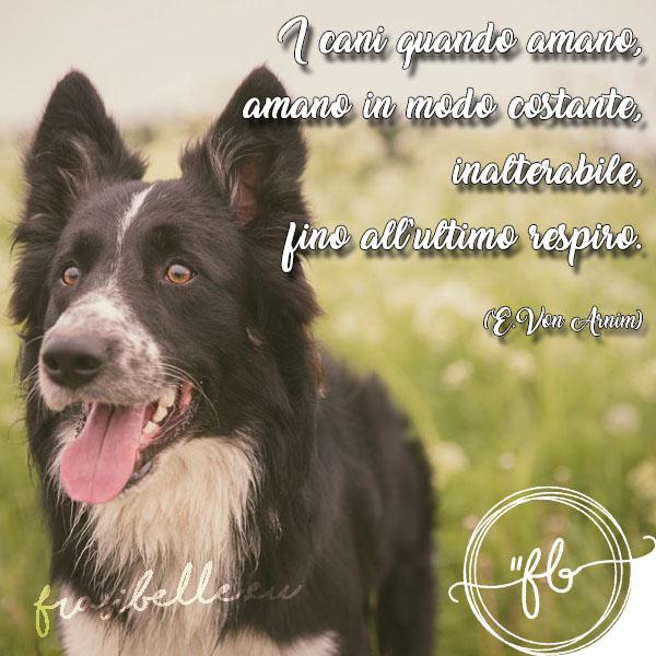 per un cane speciale