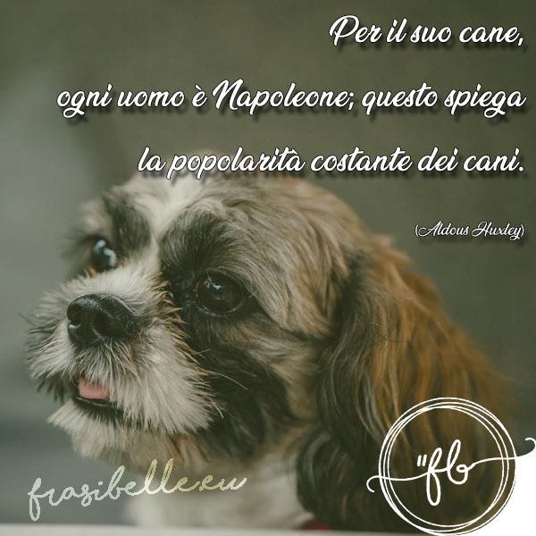 imimmagini e frasi belle sui cani
