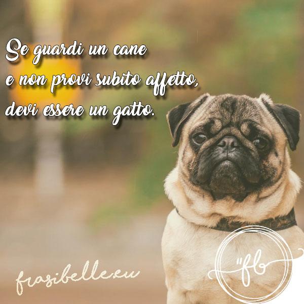 frasi belle sugli occhi dei cani