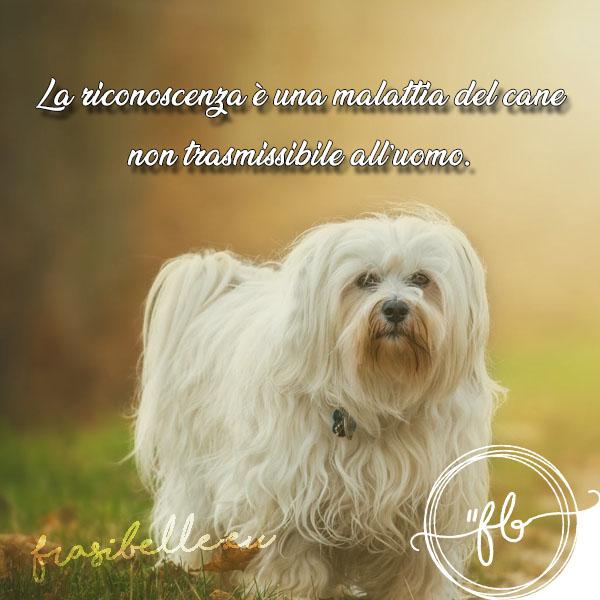 sui cani e padroni