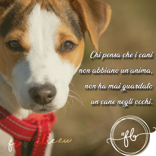frasi d'amore per cani