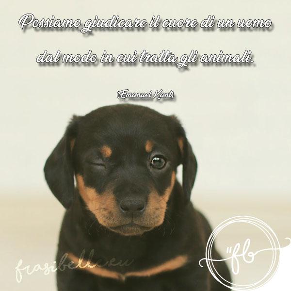 proverbi sui cani