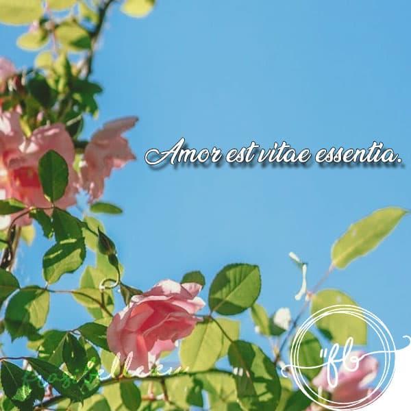 frasi belle in latino sulla vita